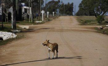 El perro es el que disemina la neosporosis<br>