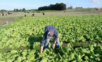 Producción de hortalizas.