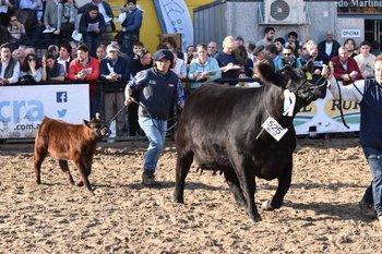 La vaca de Milkland que ganó el campeonato y llegó a la final en la exigente pista de Palermo.<br>