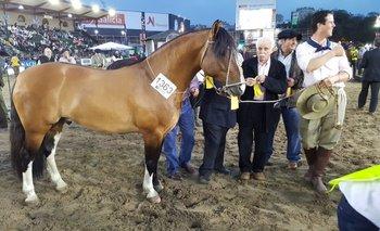 La premiación del Gran Campeón de la Exposición Rural de Palermo 2017