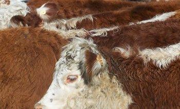 <div>La ganadería tiene un dolor de cabeza con la garrapata</div><div><br></div>