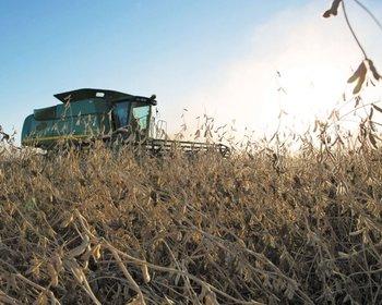 La agricultura al ritmo del cultivo de la soja enfrenta desafíos<br>