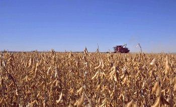 Habrá una App para seguir el ciclo del cultivo de soja y generar información<br>