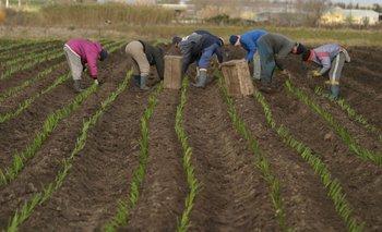 No se prevén riesgos en el abastecimiento de productos hortícolas al mercado