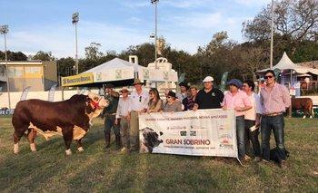 El toro de La Victoria, de Mattos, que fue el Tercer Mejor Senior<br>