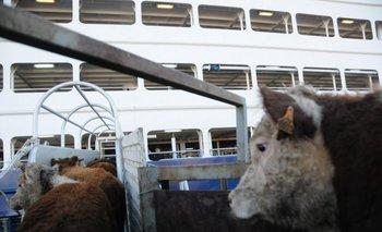 Uruguay desarrolla una firme actividad de exportación de ganado en pie