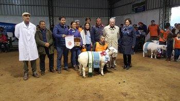 El Gran Campeón Texel PI, expuesto por cabaña Illescas, de Lucas La Cava