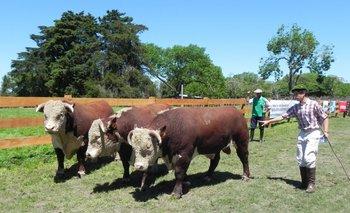 Venderán toros el viernes 6 y sábado 7<br>