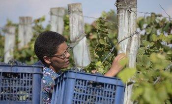 Mujer trabajando en un viñedo