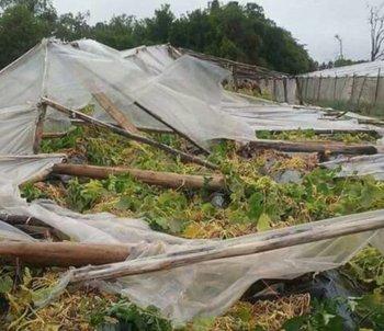 Varios rubros hortícolas fueron afectados por la turbonada en Villa Constitución, Salto.