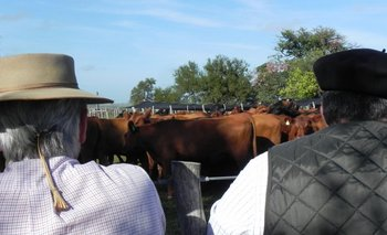 Preocupación en productores ganaderos por paralización de actividades en la industria.<br>