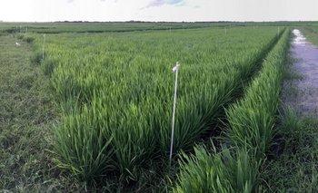 Recuperación en economía mundial comienza a impactar en productos del agro uruguayo