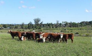 La ganadería pasa por un buen momento<br>