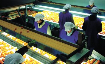 Los cítricos predominan entre la fruta fresca seleccionada que se exporta<br>