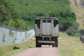 La Dinama dispuso el traslado de los animales a una reserva