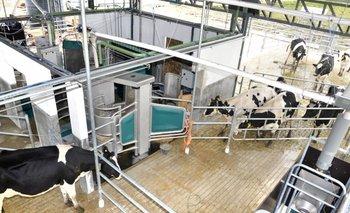 Tambo robotizado del INIA en La Estanzuela (Colonia)