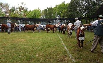 Las pistas ganaderas vuelven a lucir en la Expo Durazno que continuará hasta el próximo domingo