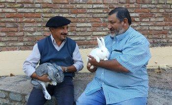 Gustavo Zícari y Hugo Piva con ejemplares Chinchilla y Neocelandés, dos razas carniceras.<br>