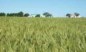 Advierten que es importante mirar las estrategias rumbo a los cultivos de invienro