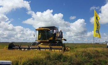 Enzo Benech y Alfredo Lago realizaron la primera trilla de arroz en la actual campaña.<br>