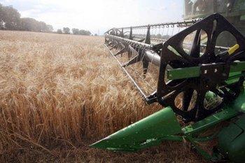 El USDA estimó que el área triguera avanzará, 6,2 millones de hectáreas