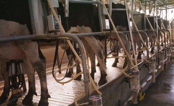 La investigación trata de dar respuestas a la demanda de mejores condiciones productivas de la lechería