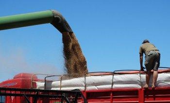 La oferta de trigo desde la región crecerá en forma notoria en relación a la campaña anterior.<br>