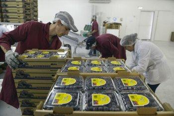 Argentina sigue sumando mercados para rubros de la granja