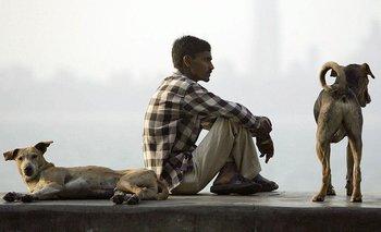 Los habitantes locales suelen cuidar y alimentar a muchos de los perros callejeros de India.