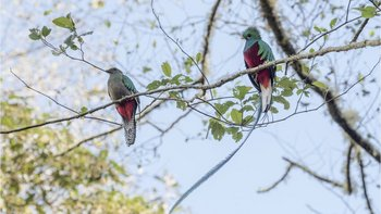 El quetzal es el ave nacional de Guatemala.
