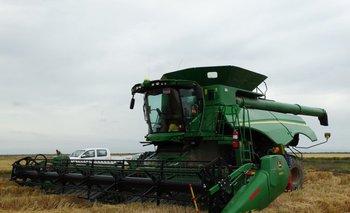 En el territorio uruguayo se espera un área menor a la cultivada en la zafra pasada.<br>