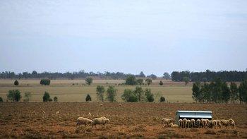 McDonald criaba ovejas en la granja de su familia en Nueva Gales del Sur.