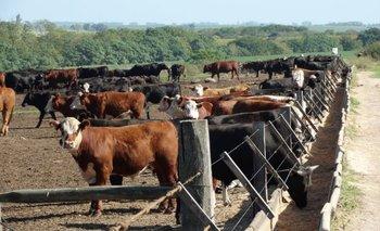 Aumenta la faena de los ganados de corrales