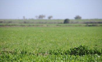 Las rentas de campos agrícolas alcanzó un valor promedio de US$ 226 la hectárea