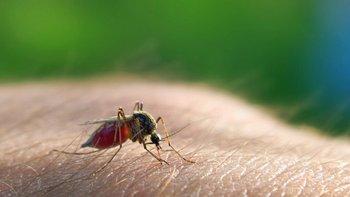 Las especies registradas son en su mayoría de género Culex (mosquito común)