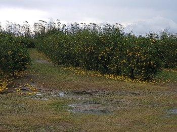 Los seguros para la hortifruticultura promovidos por el MGAP tuvieron subsidios de hasta un 90%