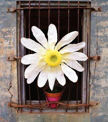 Al parecer, hay quienes florecen tras las rejas...