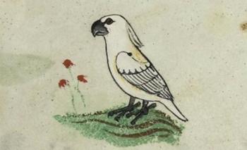 Los dibujos de la cacatúa son 250 años más antiguos que las otras representaciones europeas de esta ave conocidas hasta el momento.