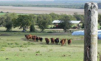 Una oportunidad de acceder a buenos campos para ganadería.