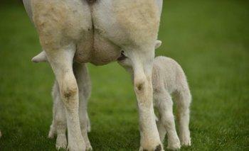 Nueva instancia de capacitación en manejo de ovinos.