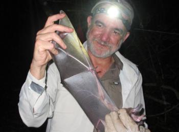 Los murciélagos son vitales en la polinización, la dispersión de semillas y el control de plagas, dice el científico.