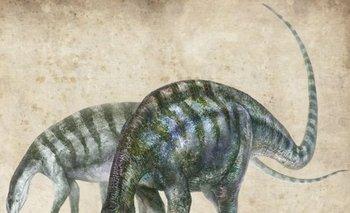 El nombre de la nueva especie es nullLingwulong shenqinull, literalmente nullasombroso dragón de Lingwunull, la ciudad más cercana al lugar donde fueron hallados los fósiles.