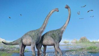nullLos saurópodos son la rama de los sauropodomorfos que llegó al gigantismonull, explicó a BBC Mundo Apaldetti.