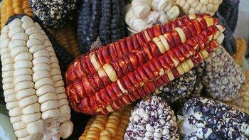 De cualquier color... pero sin los granos.