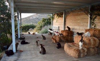 El refugio alberga más de 50 gatos en la isla griega de Siros.