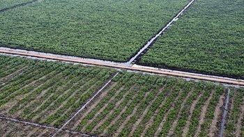 La universidad decidió invertir en cultivos agrícolas en muchos países, incluyendo varios en América Latina (foto archivo)