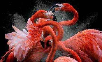 nullPocos segundos después los flamencos empezaron a pelearse y ahí es donde se hizo toda esta dinámica de formas y de curvas y de coloresnull, dijo Jarque Krebs a BBC Mundo. Esta imagen ganó el primer premio del concurso Bird Photographer of the Year.