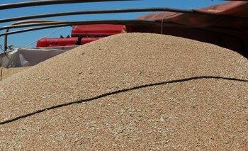 Se viene una cosecha récord de trigo en Argentina.<br>