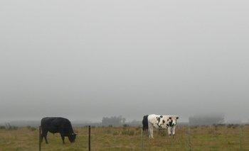 En el próximo verano se pueden registrar lluvias en volúmenes superiores a los habituales. <br>
