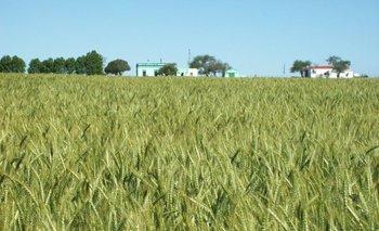 Las bajas temperaturas le dan una buena mano a los productores agrícolas.<br>